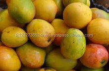 Fresh Mangoes and bush mangoes at a low rate forsale