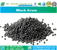 High Quality Black Gram Cheap Price