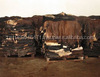 Wet Salted donkey hides Wet/Dry Salted Cattle HIdes for sale