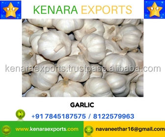 Natural White Garlic