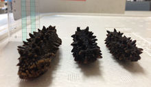 nature and healthy , sea cucumber price , at reasonable prices , small lot order available
