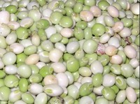 QUALITY DRY AND FRESH PIGEON PEAS