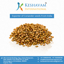 Coriander seed ready for Export