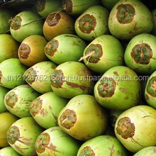 BEST PRICE FRESH YOUNG COCONUT FROM THAILAND