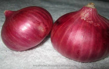 High Quality Onion for Sale | Onion Suppliers From India | Fresh Red Onion Exporters