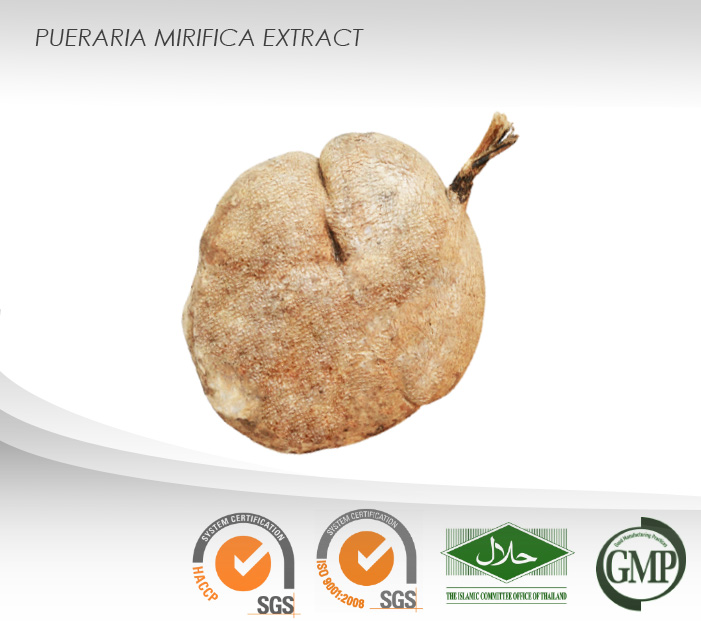 Pueraria mirifica Powder Extract (Normal Grade) : 20 mg% Puerarin