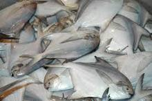 Cheap price Frozen White Silver Pomfret Fish