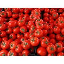 Grade A Solid Fresh Tomato For Export