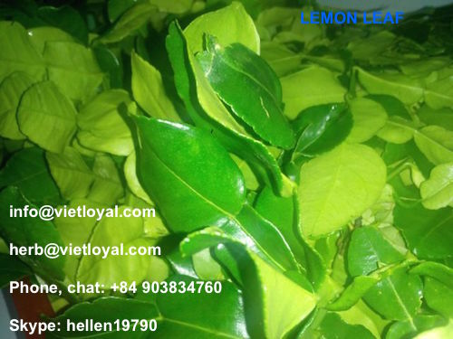 DRIED GREEN LEMON LEAVES DRY GRAPE LEAF