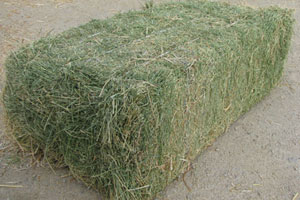 Rhodes Hay/Rhodes Grass Hay and Alfalfa Hay Animal Feed