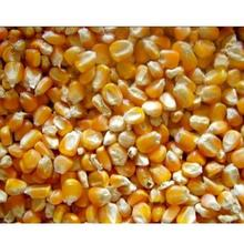 Good Quality Yellow Corn/Maize for Animal Feed