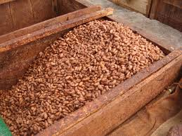 Cacao Beans Ready To Be Exported