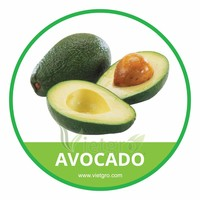 HIGH QUALITY FRESH SHEPARD AVOCADO // VIETNAMESE AVOCADO