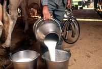 Fresh Cow's milk,