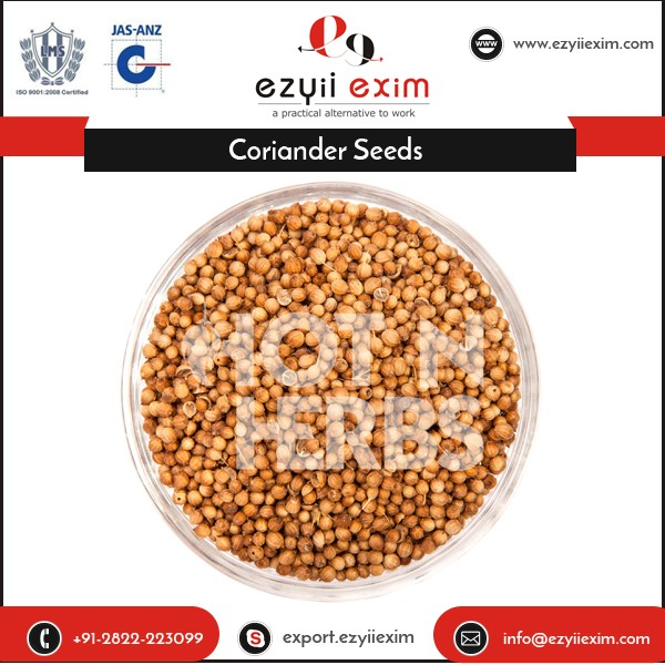 ISO Certified Company Selling Machine Cleaned Coriander Seed Spices