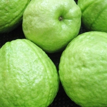 HIGH QUALITY FRESH GUAVA PRICE