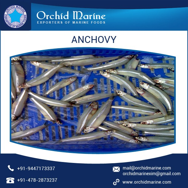 Long Shelf Life Superior Taste Dried Anchovy Fish Exporter