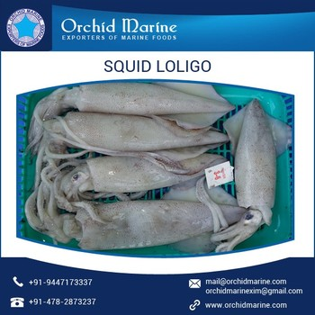 Delicious Frozen Loligo Squid with Longer Shelf Life at Affordable Price