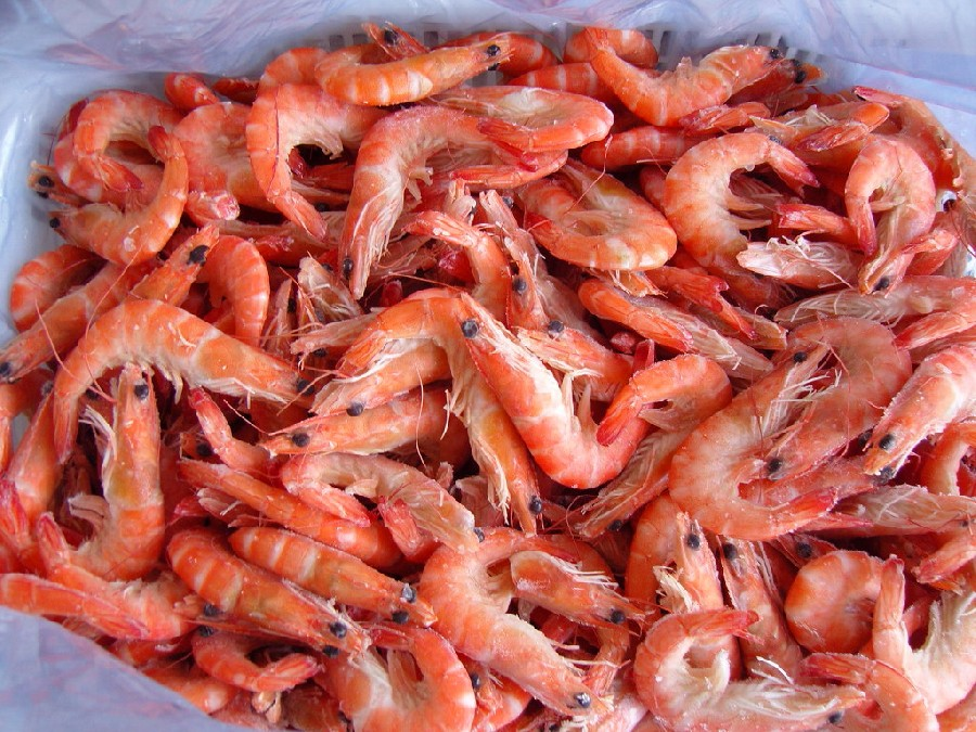 PUD red shrimp