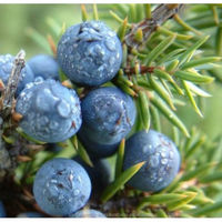 2015 Pure & Natural Juniper Berry Oil