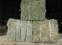 Double Compressed Premium Alfalfa Hay