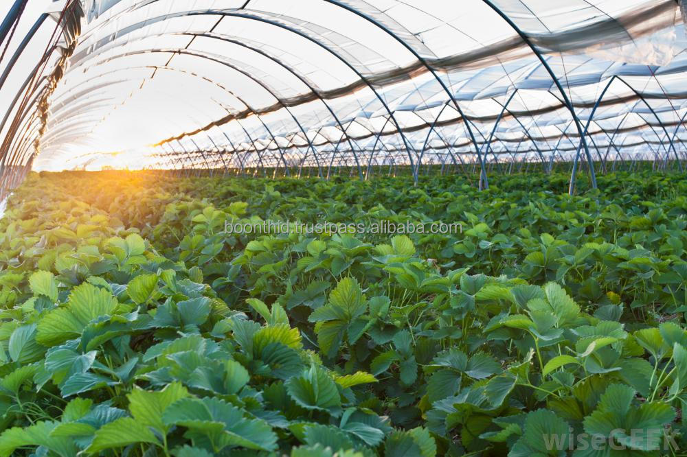 200 Micron Greenhouse film for agricultural