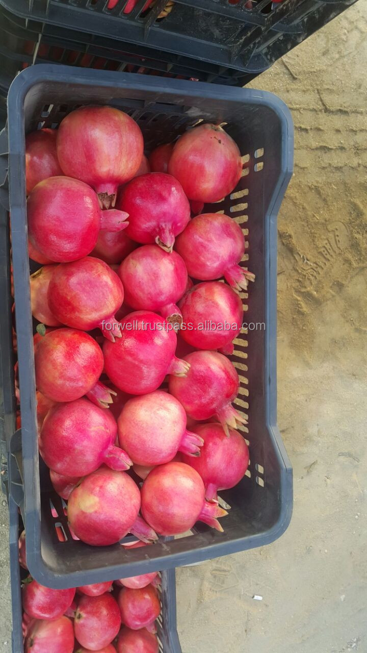 fresh Pomegranate full in size export quality