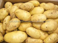 Fresh Potato From Ukraine,Fresh Holland Patato