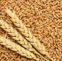 Soft wheat, Wheat, grains, barley, wheat flour, best quality, cheap, pure, natural, non GMO, organic