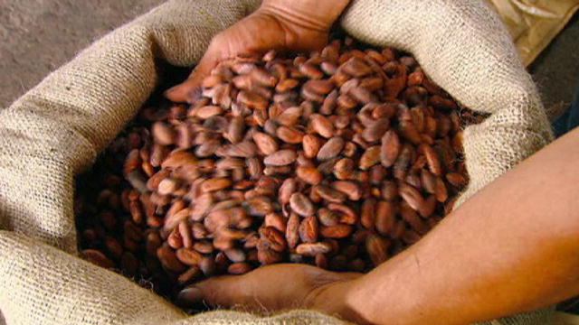 Cacao bean / cocoa (Organic certified) available for sales