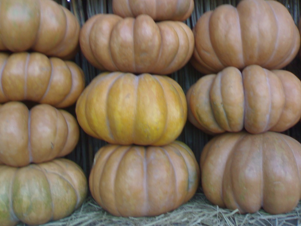 fresh organic pumpkin