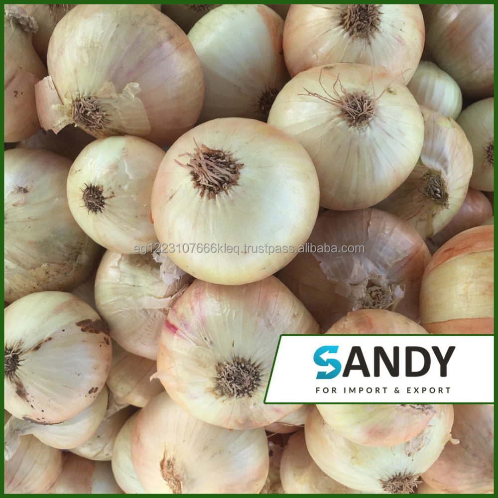 lowest price fresh yellow onion