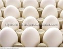 Best eggs 50-55 grms