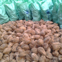 Whole sale coconuts from Tamilnadu