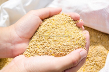 bone meal, soybean meal, fish meal, corn gluten meal, wheat bran, palm kernel cake for sale at very competitive prices