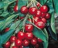 Cherry , fresh fruits