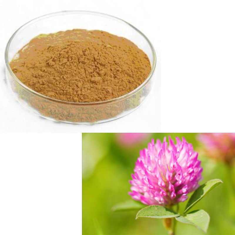 GMP Approved Top Quality 10:1 Red Clover Powder Red Clover Extract