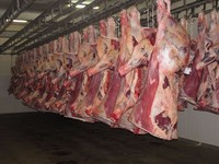 Halal Fresh and Frozen Goat , Lamb , Sheep ,Meat C..