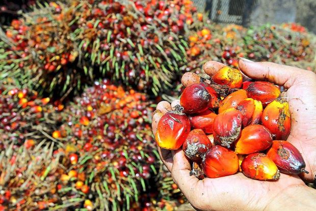 Malaysia Best Quality Crude Palm Oil best price