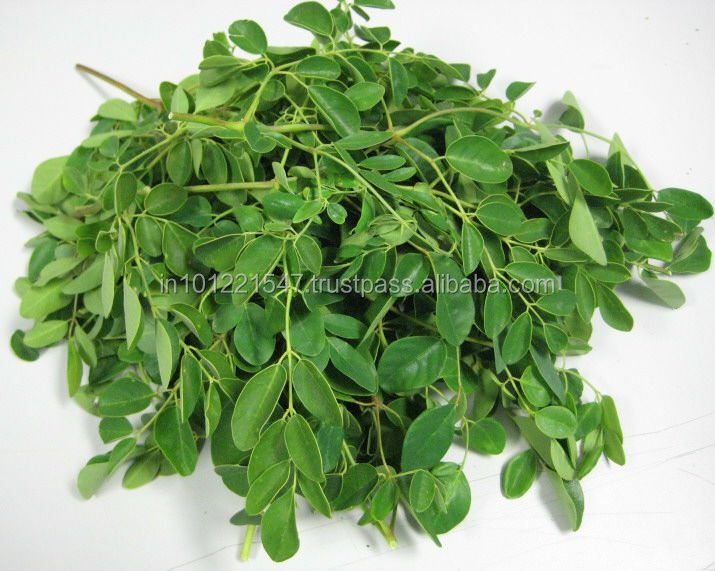 Moringa oleifera tree Leaf for export