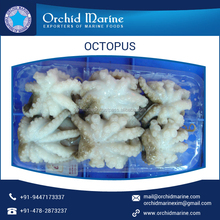 Wholesale Frozen Healthy Clean Octopus in all sizes