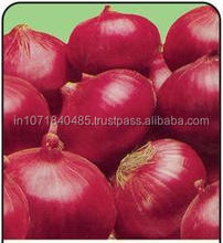 Fresh Onion Prices in India