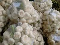 Fresh Egyptian White Garlic