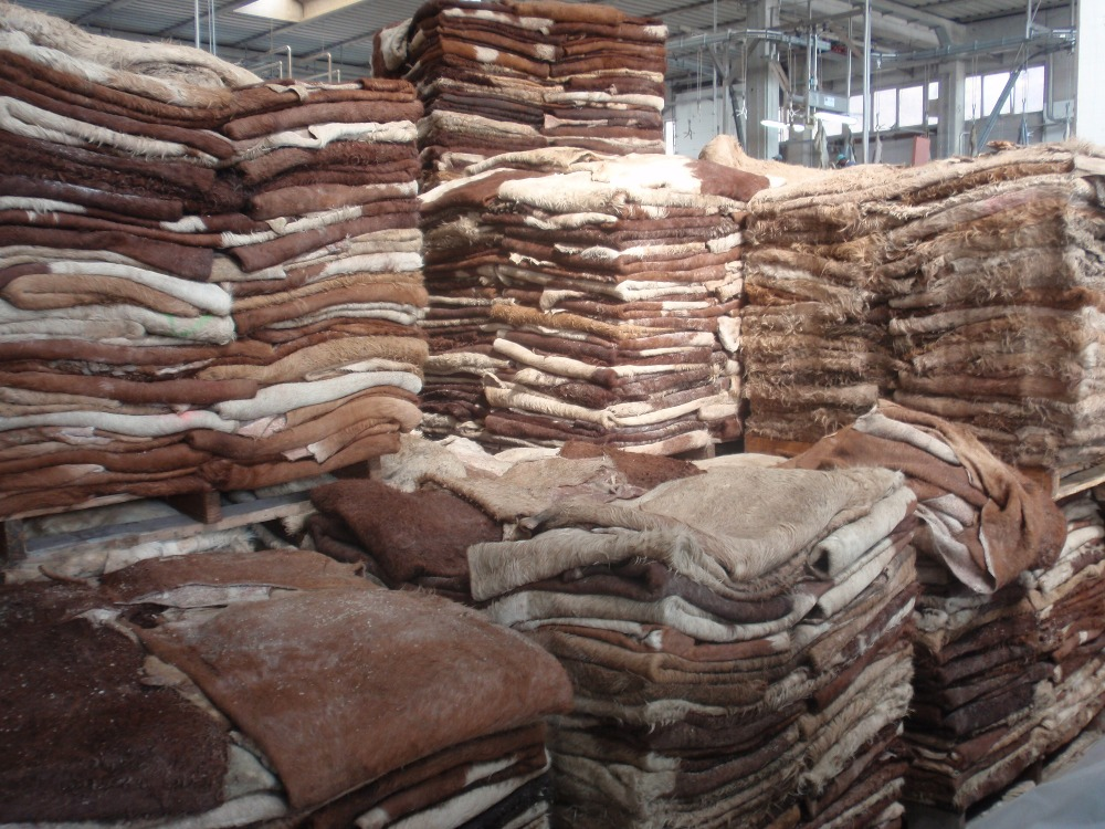NEW Grade AA+ Animal Dry and Wet Salted Donkey/Goat Skin /Wet Salted Cow Hides