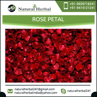 Natural Rose Petal for Wedding Decoration