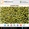 Raw Processing Type Organic Coriander Seeds at Low Price