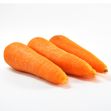 Hot sale ! Viet Nam Wholesales Fresh Vegetables carrot (WHATSAPP 0084 941 428 497)
