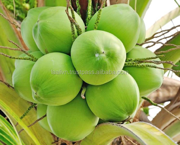 FRESH YOUNG SWEET COCONUT BEST PRICE