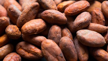 Cheap Dried Raw Cocoa Beans