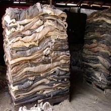 Dry And Wet Salted Donkey/Wet Salted Cow Hides /Cow Head Skin Sale .